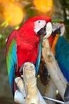 bird, tropic