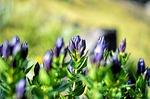 flower, vivid color