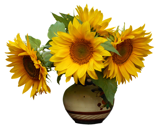 Alam Tanaman Daun Bunga Foto Gratis Di Pixabay