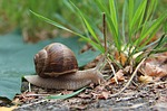 slowly, snail