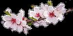 blossom, bloom
