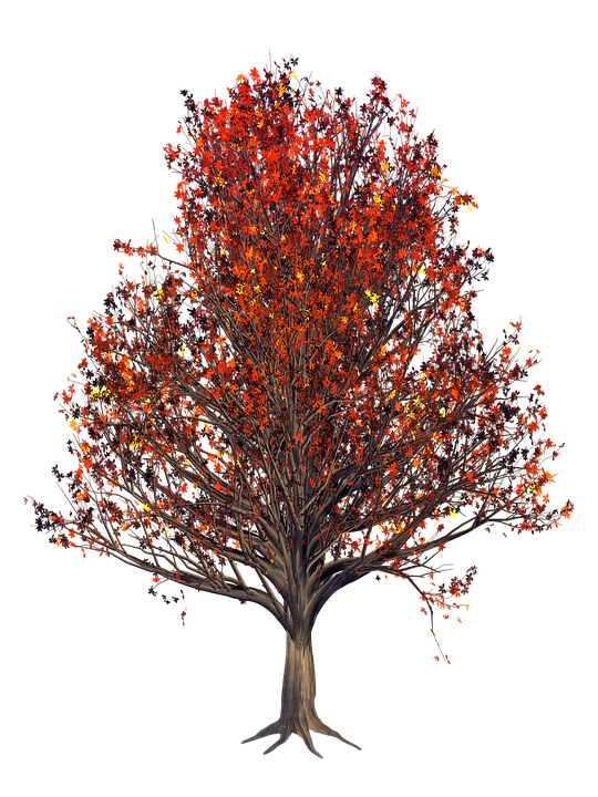 Leaf Nature Tree · Free image on Pixabay Green Road Sign Png
