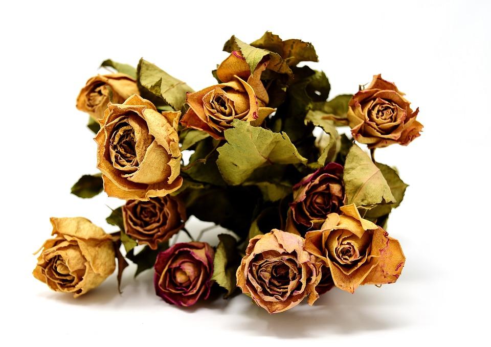 yuk-coba-8-cara-mengawetkan-bunga