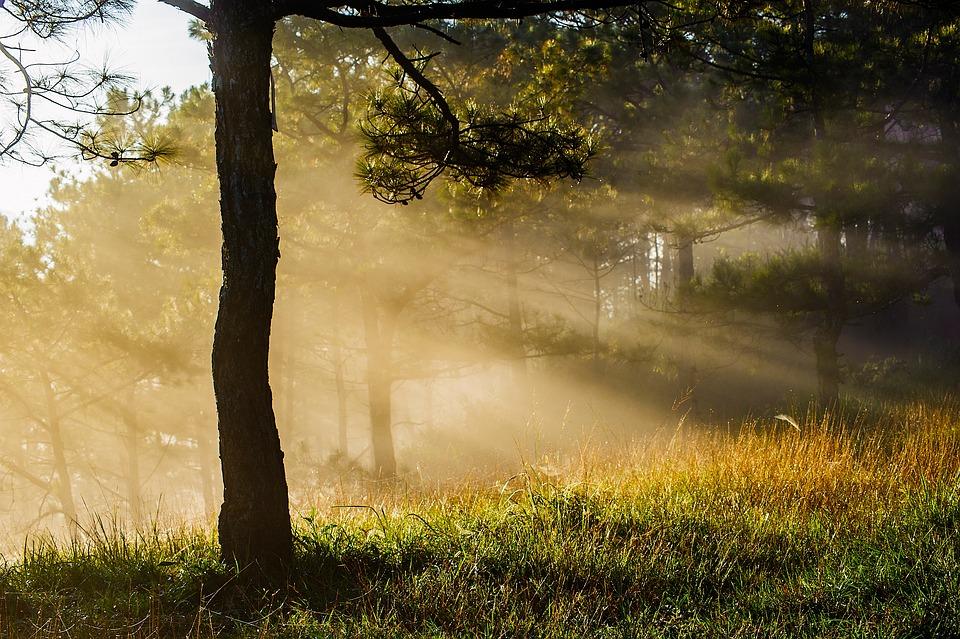 Profondeur ( Existence / Connaissance ) Forest-3057907_960_720