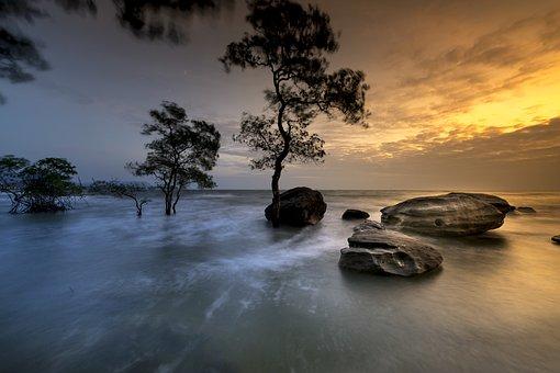 富国, 岛, 越南, 树木, 红树林, 日落, 大海, 很好, 天性, 水