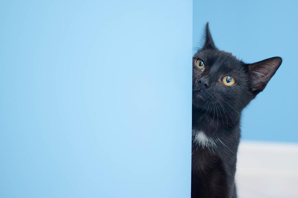 Čierna mačička videá na stiahnutie zadarmo