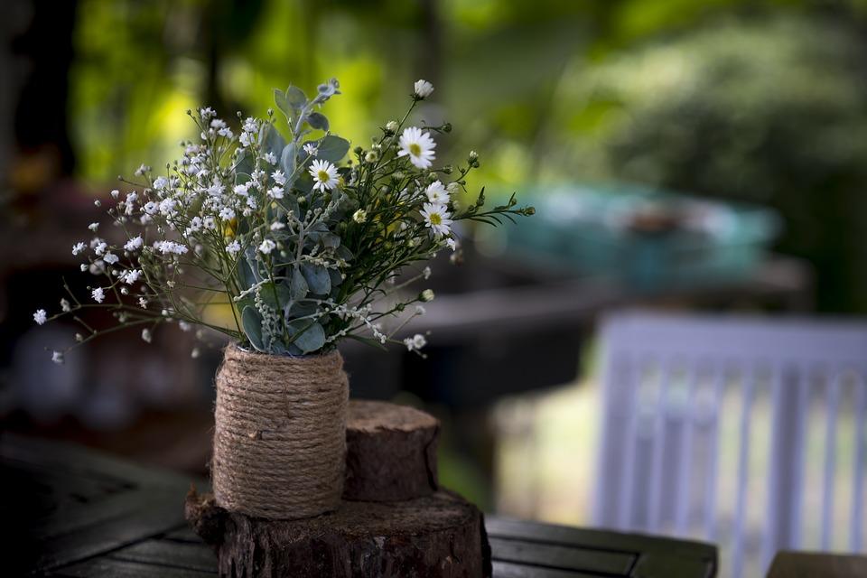 Nature, Le Jardin, Bébé, Chrysanthème, La Moyenne, Fond