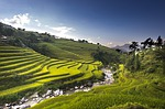 vietnam, rice, rice field