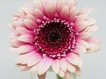 flower, petal, nature