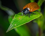 insect, beetle, no one