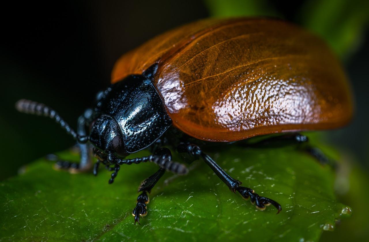 жуки картинки и фотографии салонная стрижка каскад