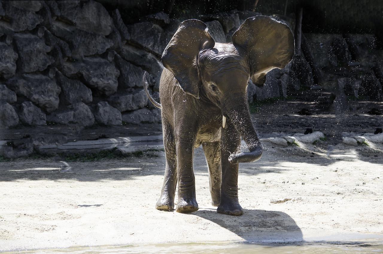 Картинки смешные со слонами, днем рождения