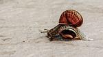 overtaking, snail, slowly