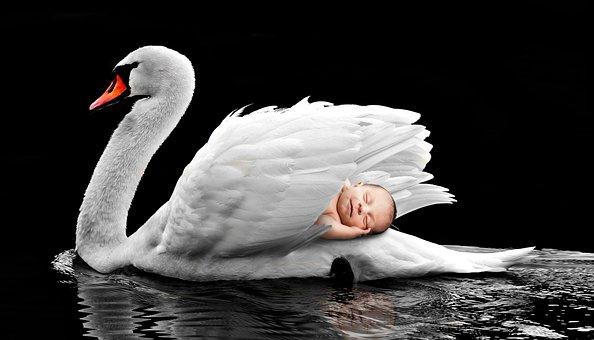 Bird, Waters, Nature, Animal World, Swan