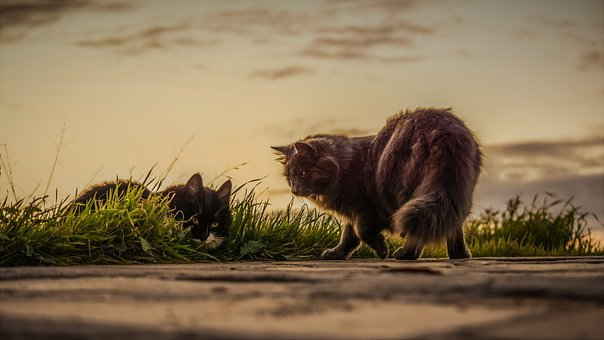 Cats, Stray, Sunset, Nature, Outdoors