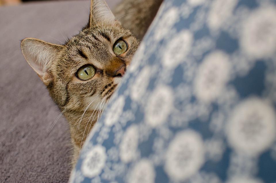 Cat Bury Domestic A - Free photo on Pixabay