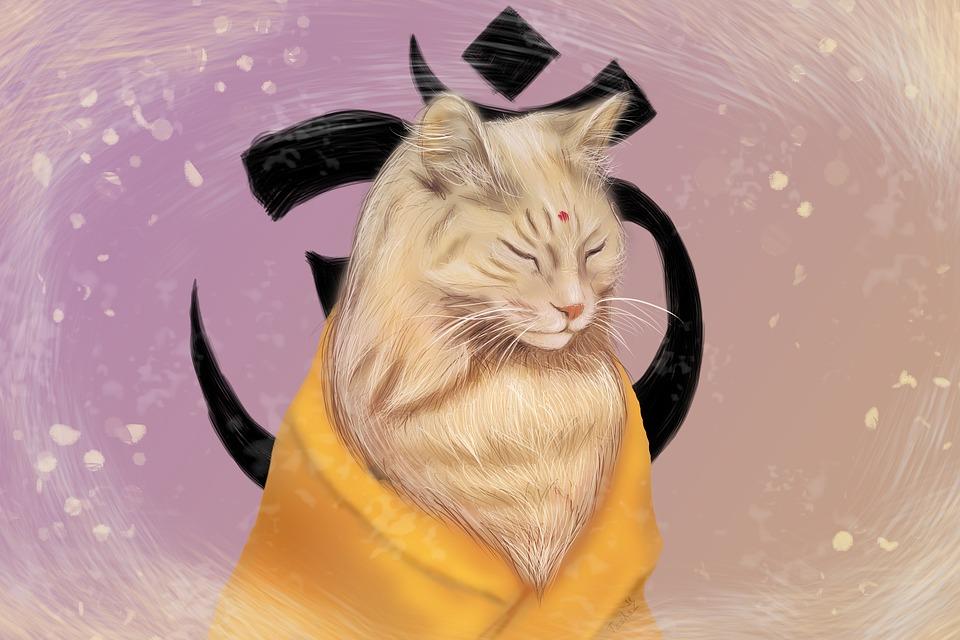 Ryšavka dievča mačička