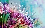 nature, flower, flora