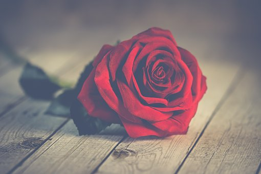 Nature, Roses, Romantic, Nice, Love