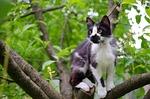 cat, domestic cat, animal