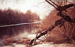 nature, winter, tree