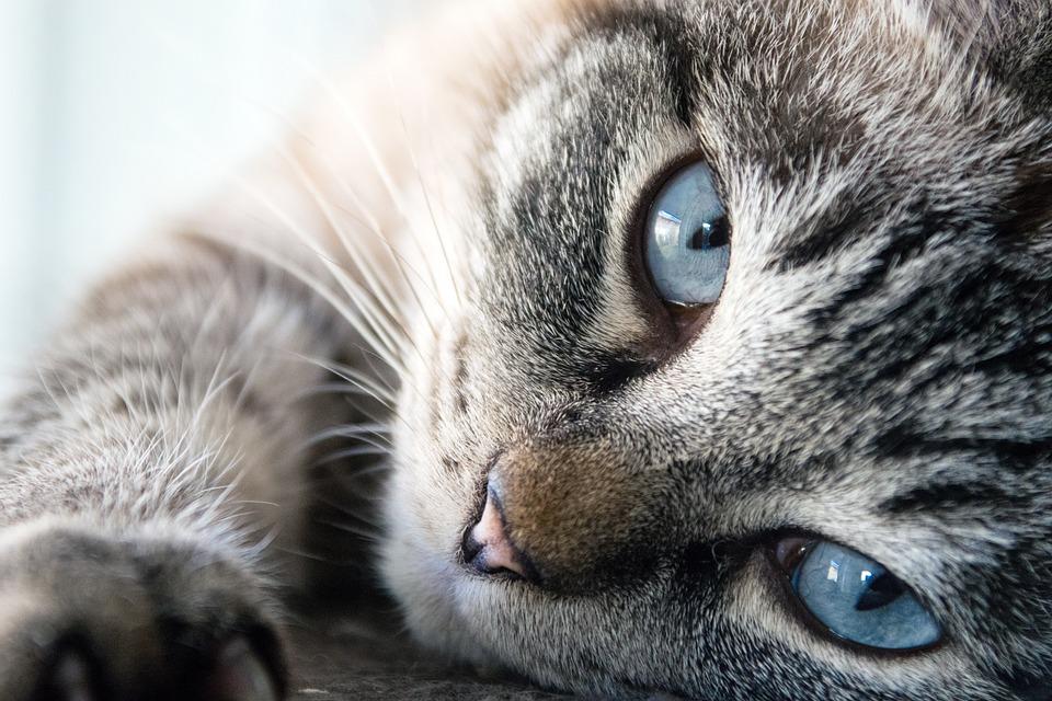 Katze, Niedlich, Tier, Säugetier, Pelz, Kätzchen