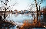 nature, tree, winter