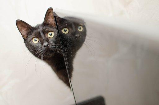 méchant noir chatte pic grosse queue de terre
