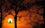 tree, sunset, dawn
