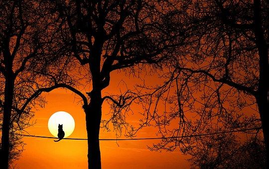 木, 猫, シルエット, 日没, 日の出, 夕暮れ, 自然, 太陽, 夜, 季節