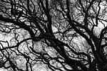 tree, branch