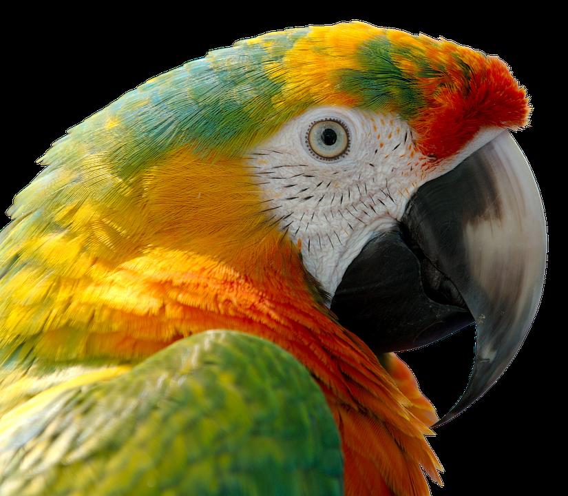 Parrot Bird Feather · Free photo on Pixabay