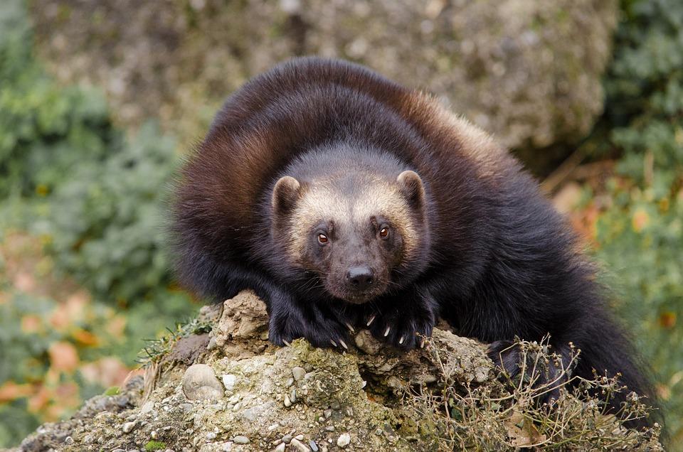 Animal World, Däggdjur, Natur, Djur, Söt, Frossare
