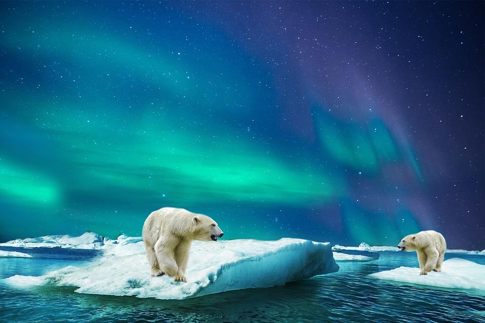 Oso Polar, Vidrio, Oso, Polar, Animales, Aurora
