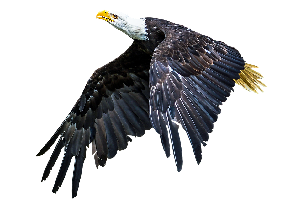 animal bird adler free photo on pixabay