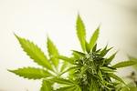 marijuana, cannabis, hash