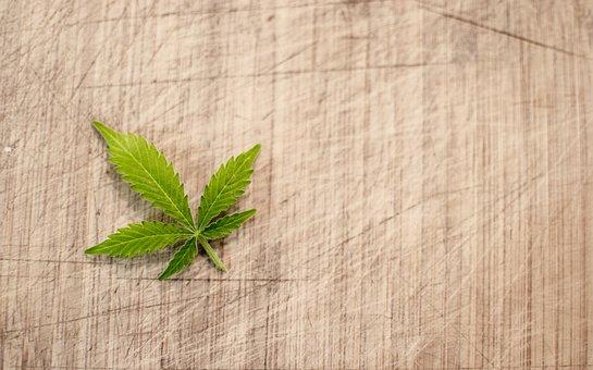 Marijuana, Cannabis, Hash, Leaf