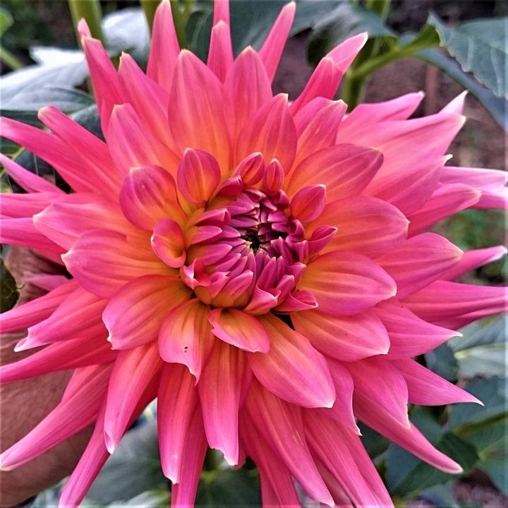 Fleur Rose Ete Photo Gratuite Sur Pixabay
