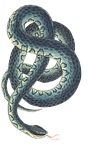 snake, reptile, background