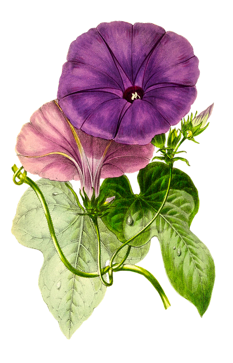 Planta, Flor, La Naturaleza, Hoja, Aislado, Vintage