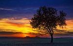 sunset, nature