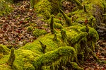 moss, nature, wood