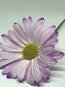 Fleur, Flore, Nature, Pétale, Été