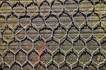 wire mesh, wire, mesh