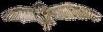 eagle owl, owl, species