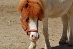 pony, horse, cute