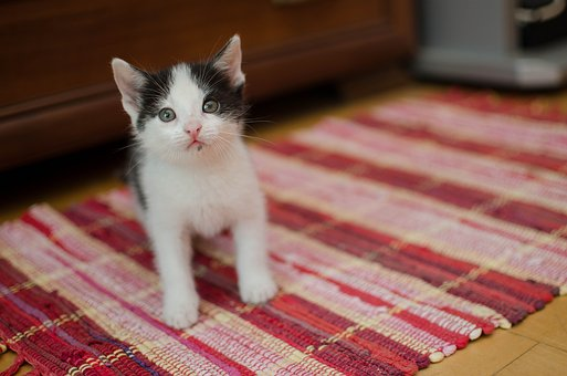 Gato, Gatinho, Pequeno Gatinho