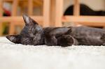 cat, black cat, rest