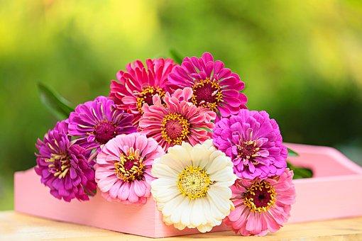 Flower, Gerbera, Daisy, Nature, Flora