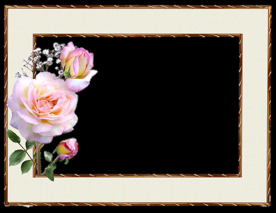 Rahmen Gold Rand Rosa Rose · Kostenloses Foto auf Pixabay